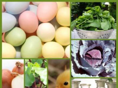Eieren verven met plantaardige verf